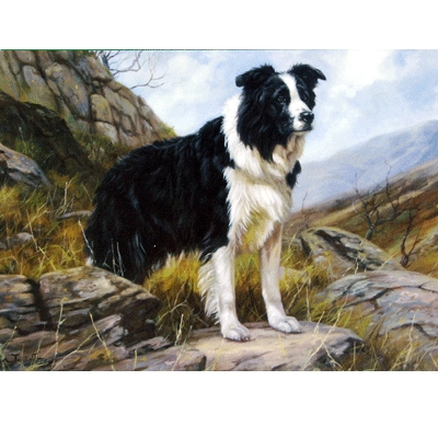 Hillside Watch (Border Collie) Blank Greeting Cards - 6 Pack