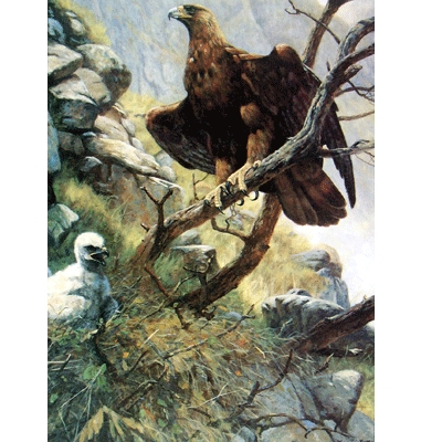 The Eagle Eyrie Blank Greeting Cards - 6 Pack