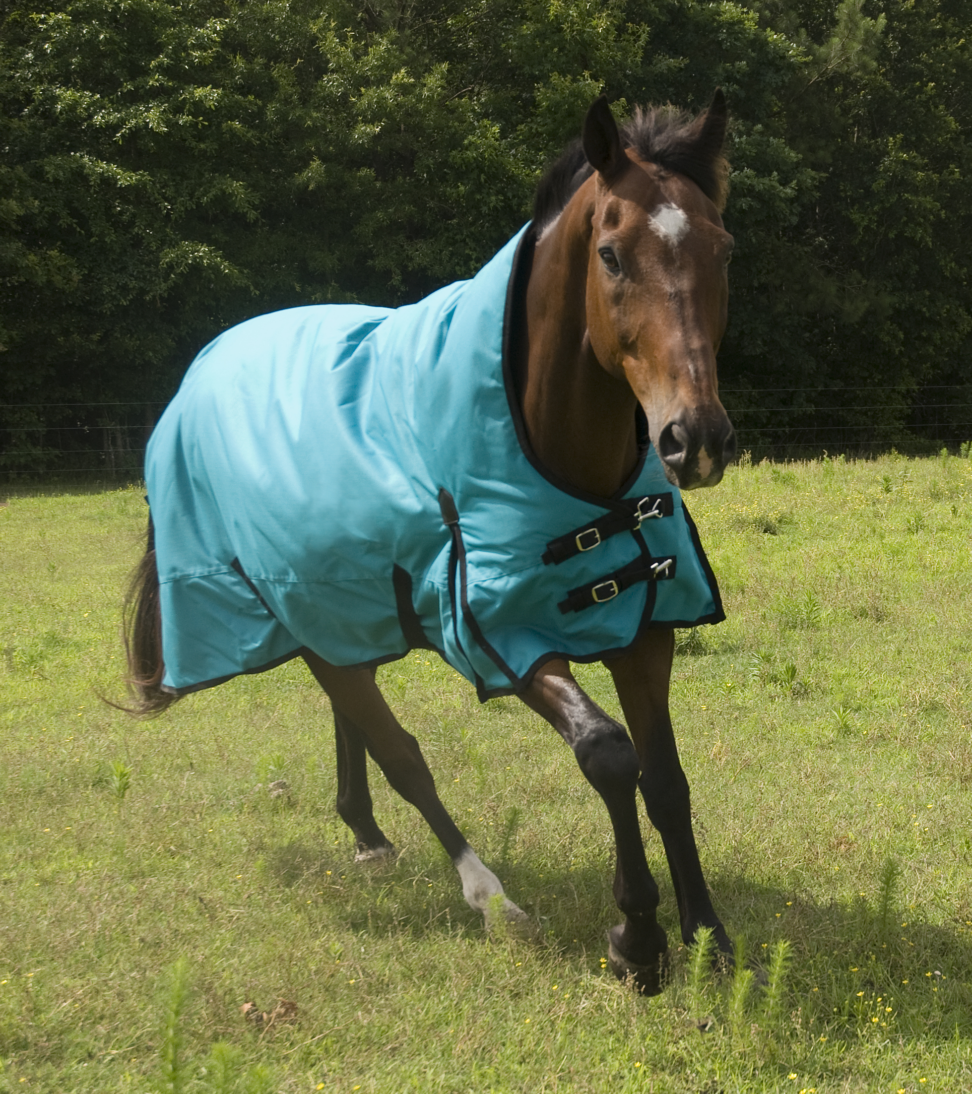 KODIAK 1200D HIGH-NECK Mediumweight Turnout Blanket