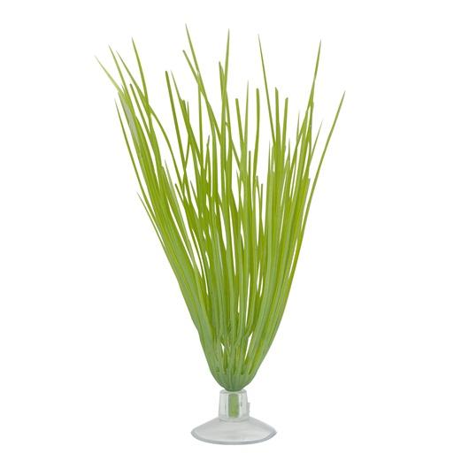 Marina Betta Kit Plant, Hairgrass