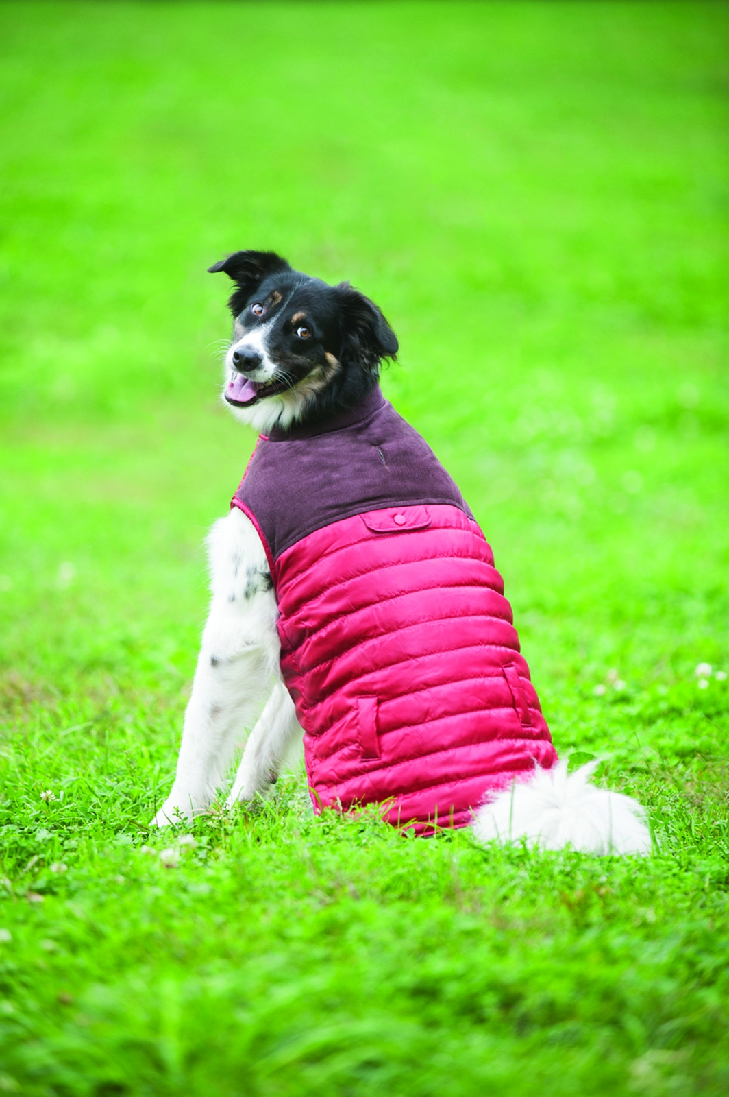 Outdoor Dog Corduroy Puffy Dog Vest