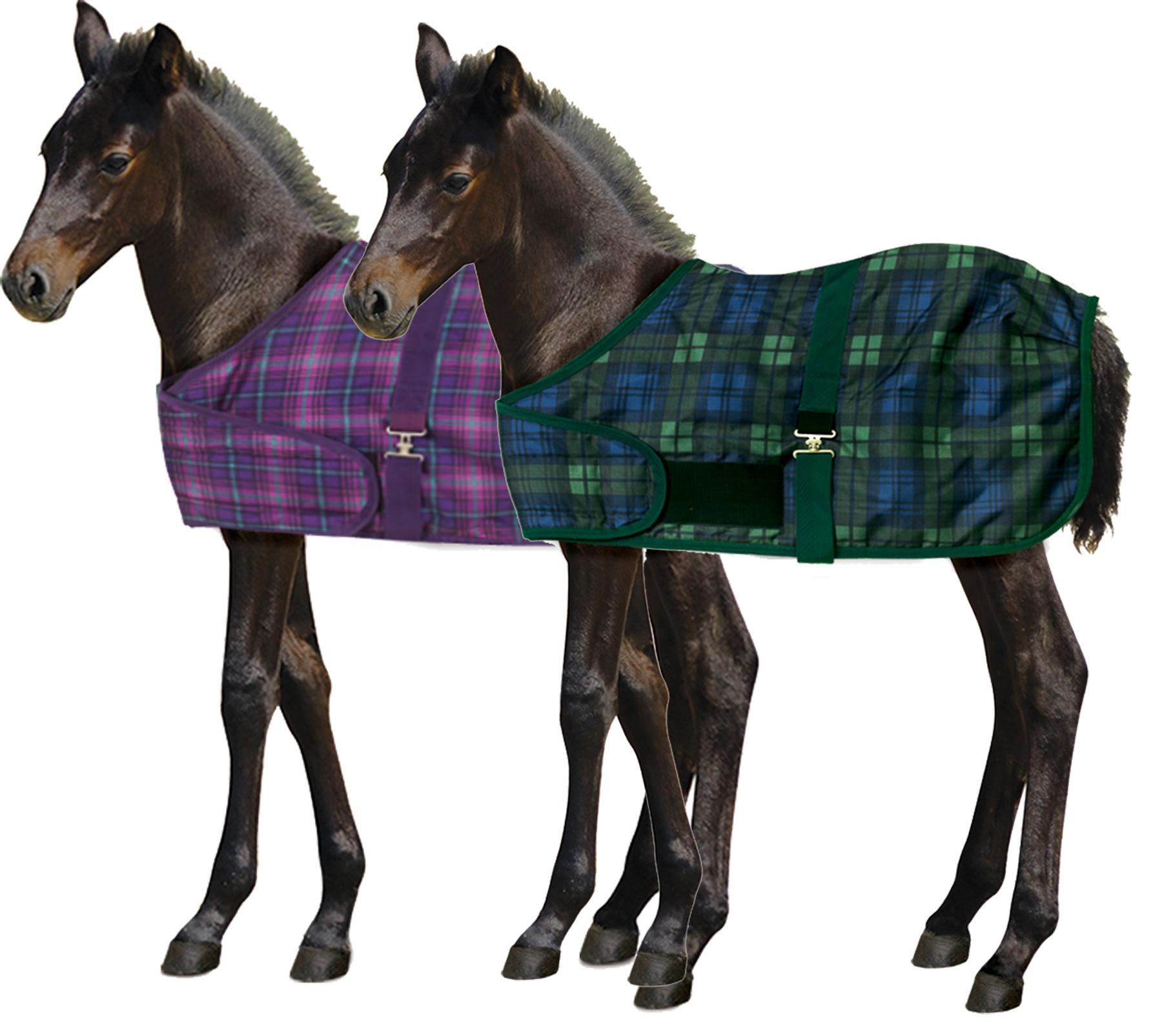Centaur Foal Turnout Blanket