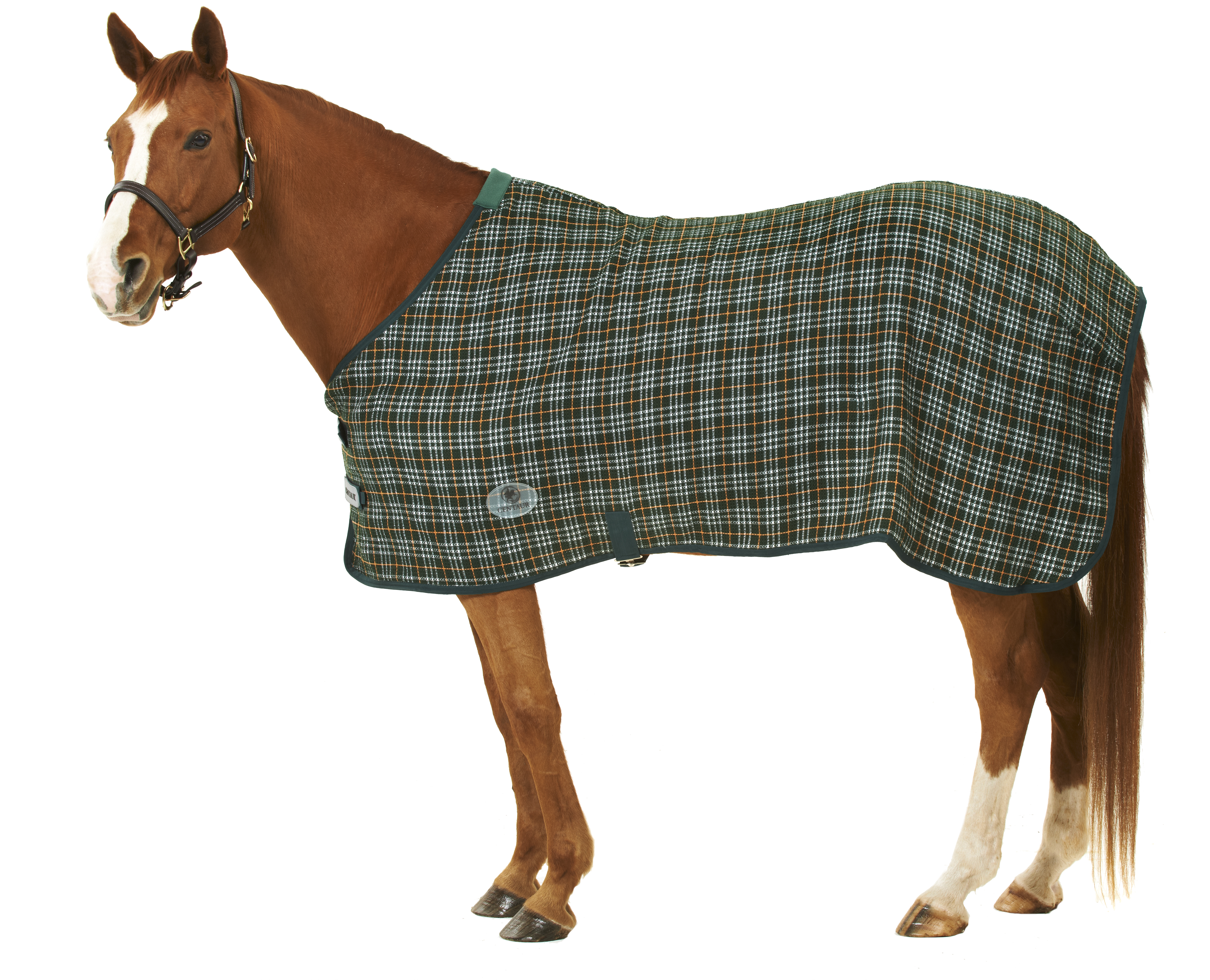 Centaur Wickster