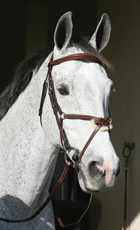 HDR Pro Stress Free Raised Figure 8 Noseband Bridle