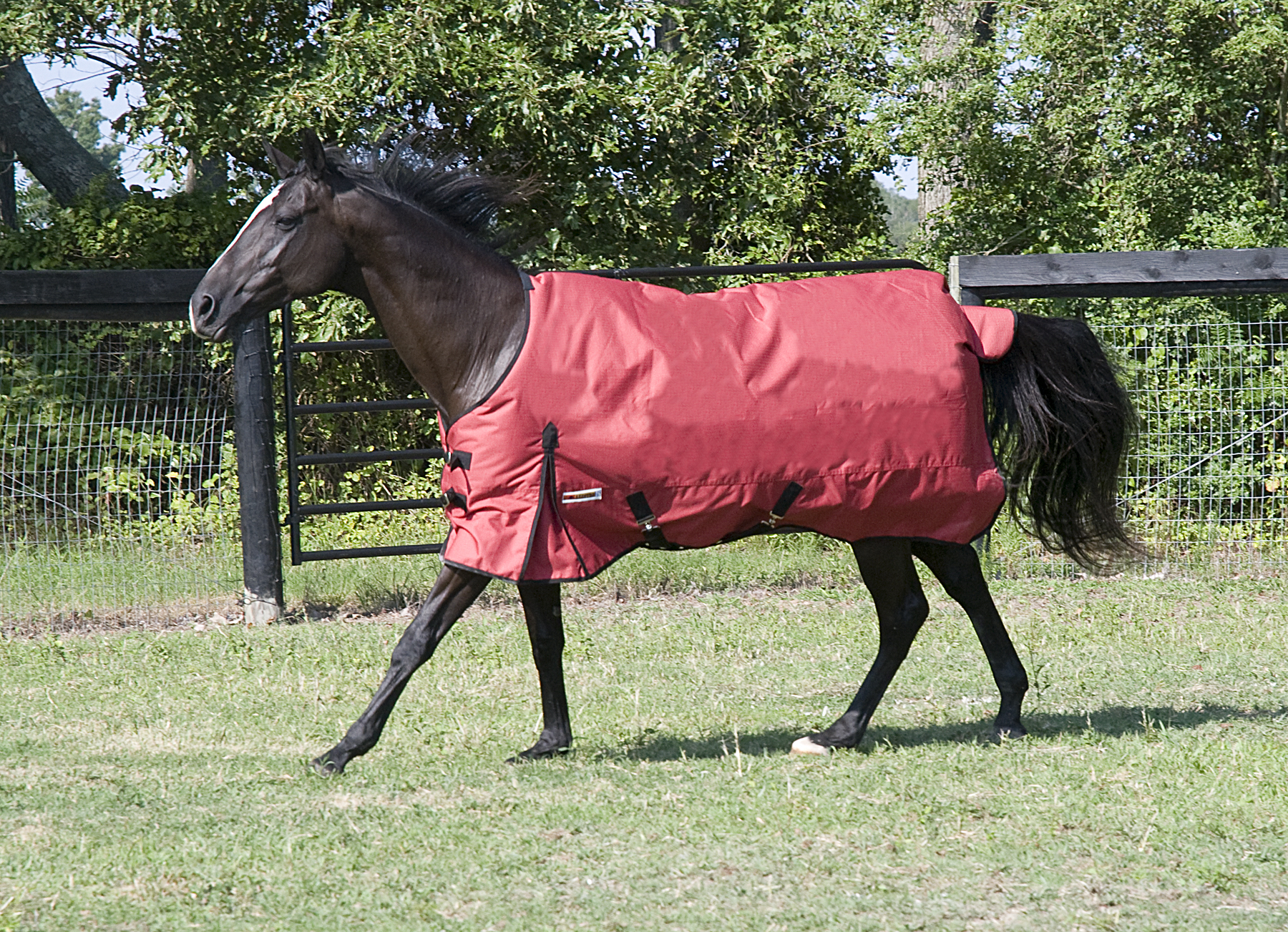 McAlister 600D Mediumweight Waterproof Turnout Blanket