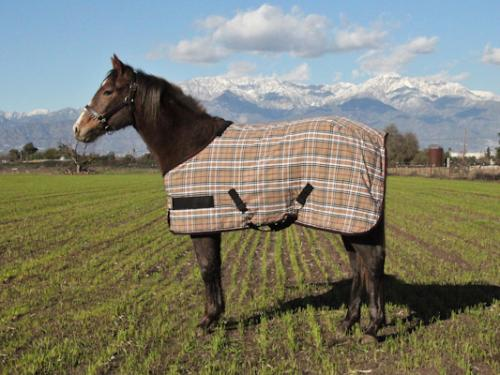 Kensington Plaid Poly Cotton Foal Stable Sheet