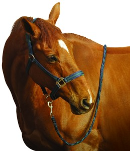 Centaur Breakaway Halter & Lead