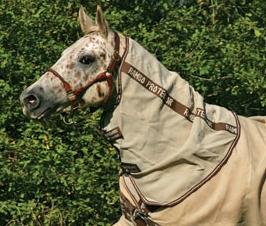 Rambo Quarter Horse Protector