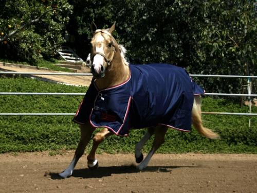 Kensington All Around European Cut Light Weight Turnout Blanket