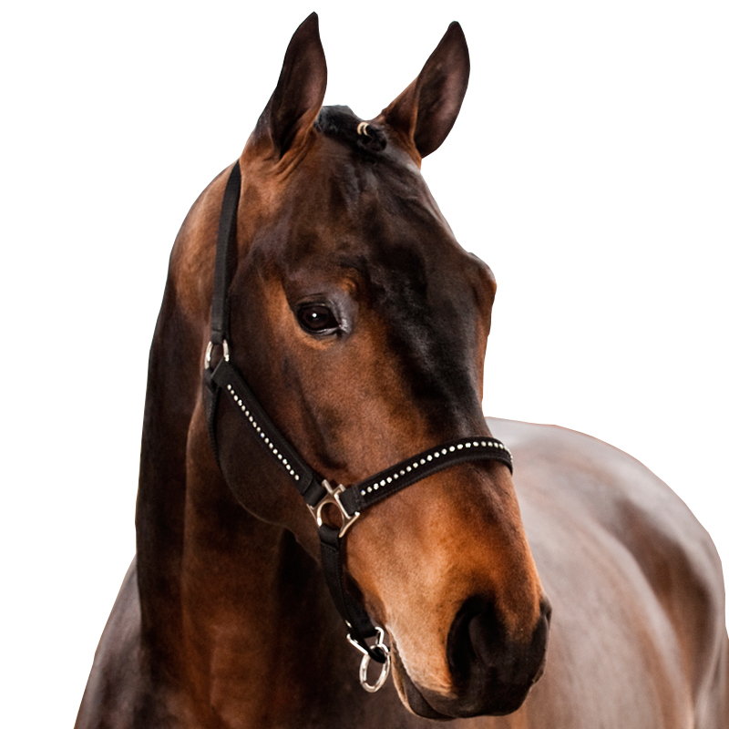HorZe Nylon Halter With Diamonds