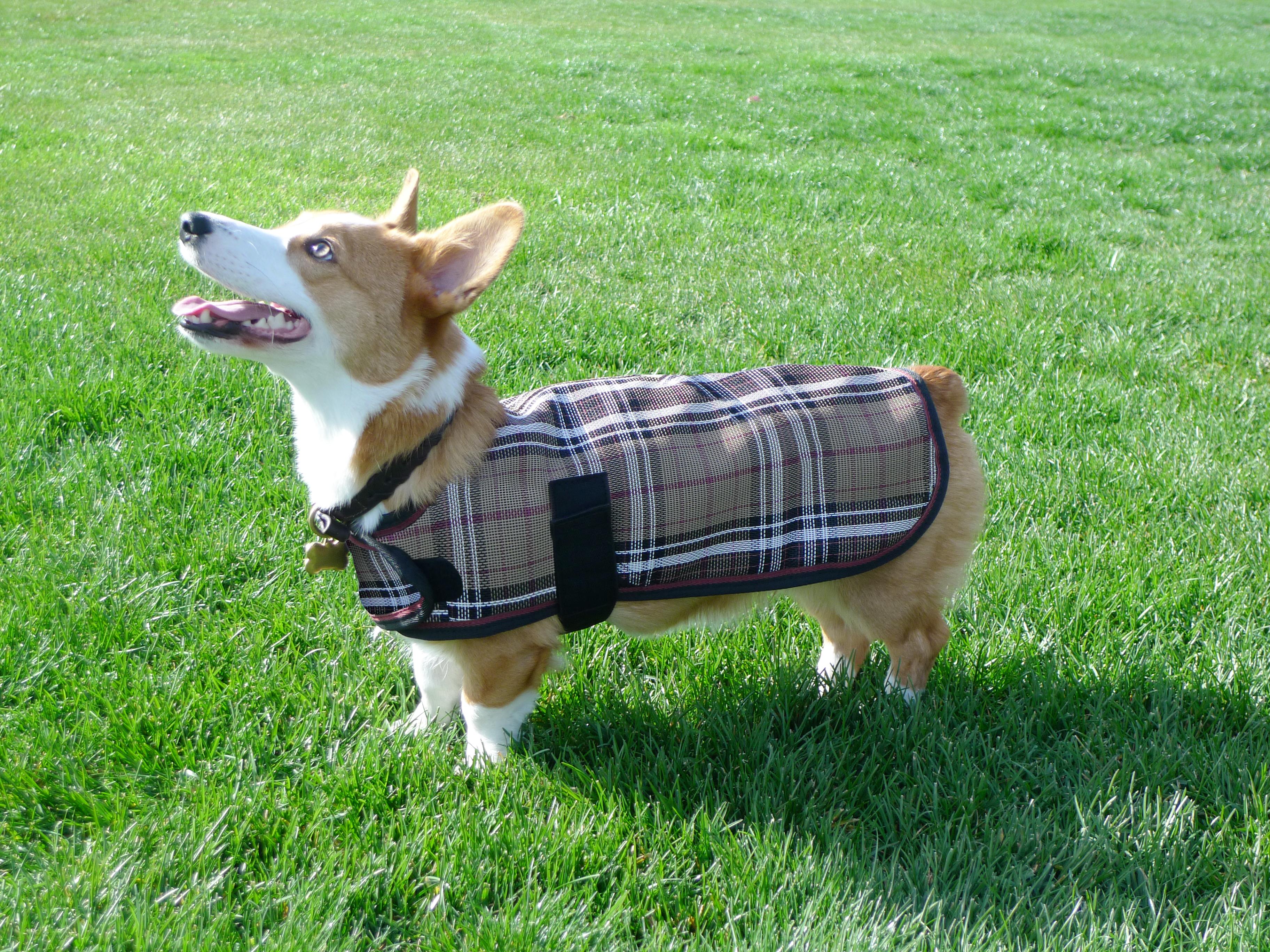 Kensington Protective Dog Sheet