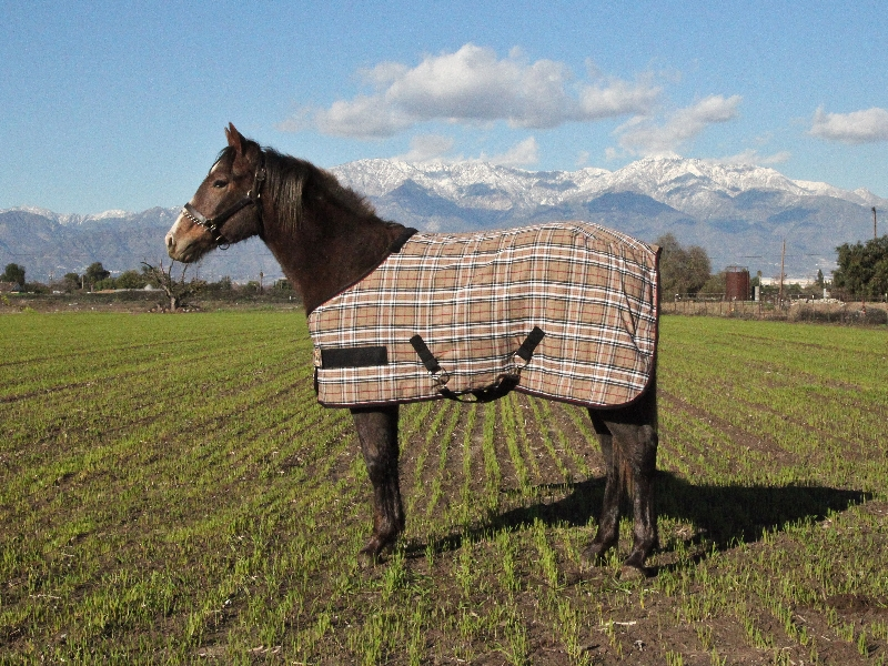 Kensington Plaid Poly Cotton Stable Sheet - Yearling