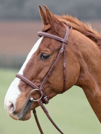Lexington Bridle