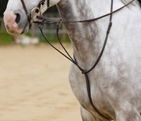 Running Martingale, Plain Raised