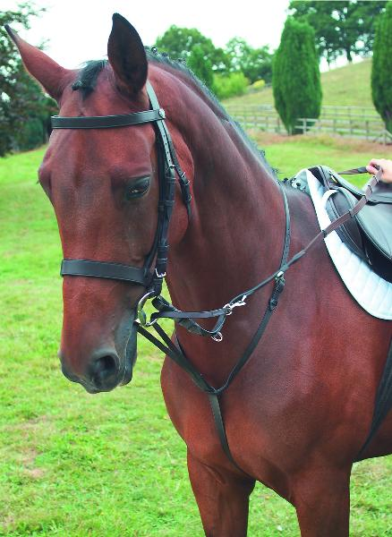 Horse Martingales German Standing And Running