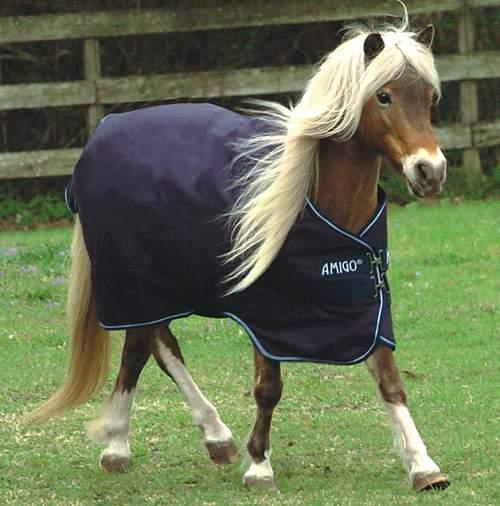Medium Weight Horse Blankets On Flipboard By Str8talk